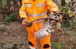 Bombeiros resgatam coruja presa em linha de pipal em Congonhas